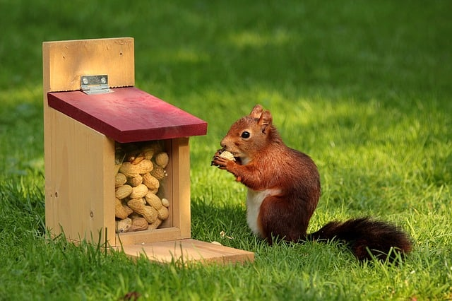 Where to put my money? This little squirrel is saving peanuts for the future.